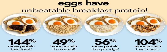 Proteine din Albuș de Ou